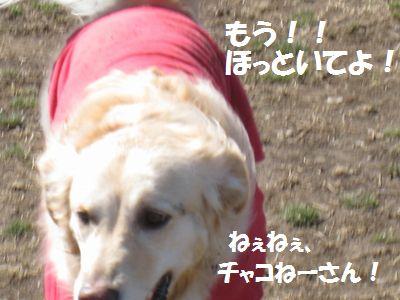 IMG_0970.jpg