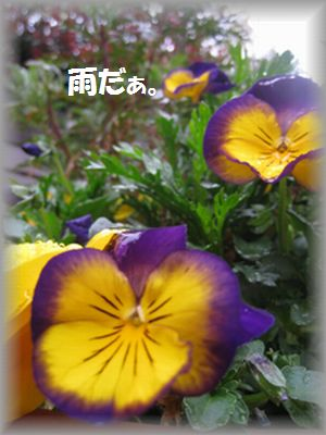 IMG_1462.jpg