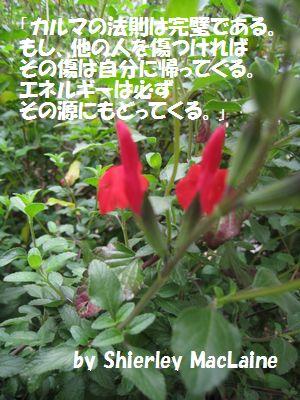 IMG_1799.jpg