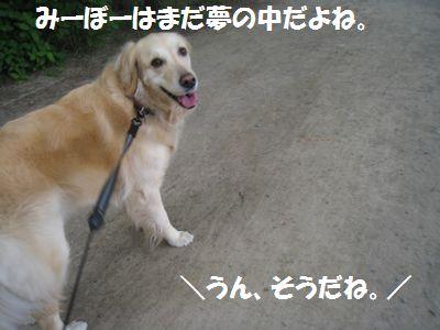 IMG_2340.jpg
