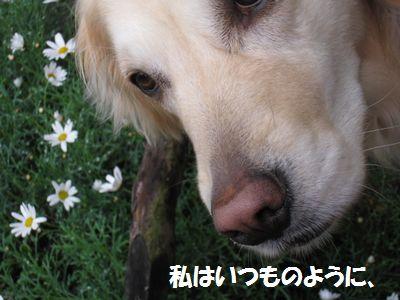 IMG_2427.jpg