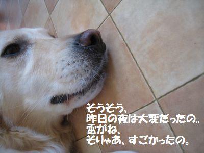 IMG_3043.jpg