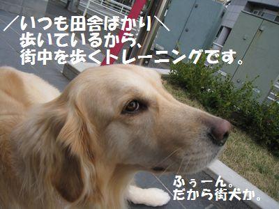 IMG_8043.jpg