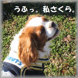 IMG_8211.jpg