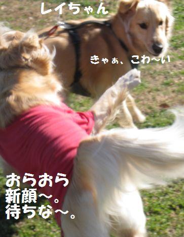 IMG_8238.jpg