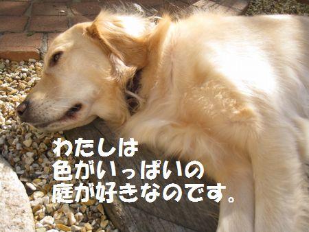 IMG_8267.jpg
