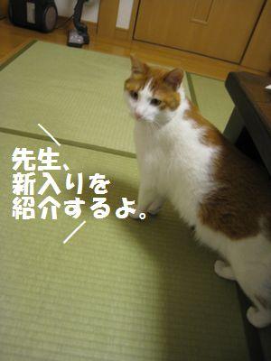 IMG_8313.jpg
