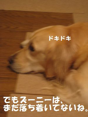 IMG_8445.jpg