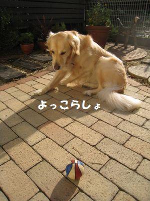 IMG_8582.jpg