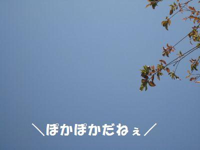 IMG_8593.jpg