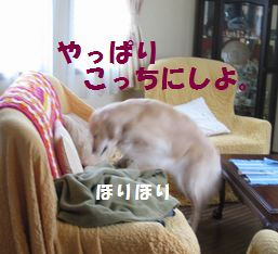IMG_8684.jpg
