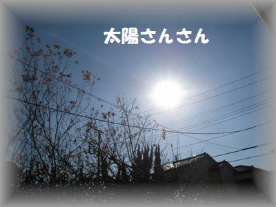 IMG_8733.jpg