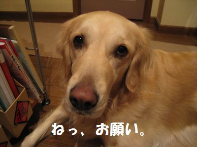IMG_9329.jpg