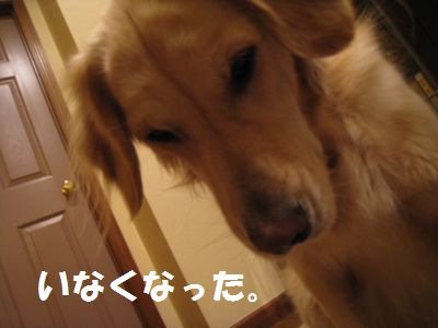 IMG_9342.jpg