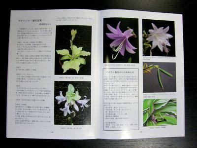 CIMG6034-20090303.jpg