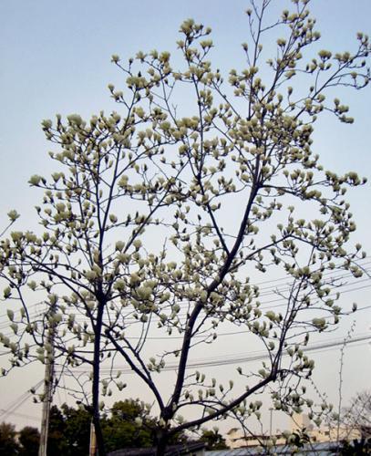 CIMG6380-20090316-2.jpg