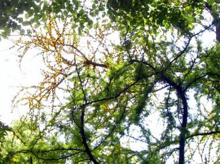 CIMG9619-20090524.jpg