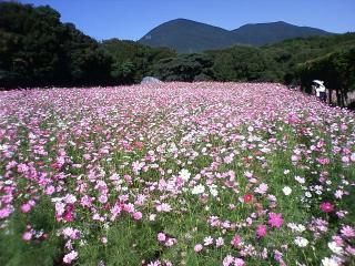 お花畑1_DCF_1525