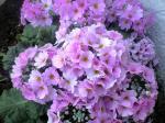 花シリーズ10033