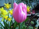 花シリーズ10037