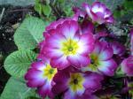 花シリーズ1042