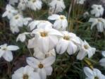 花シリーズ10088