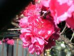 花シリーズ10107