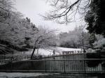 雪の蚕糸の森公園1002181
