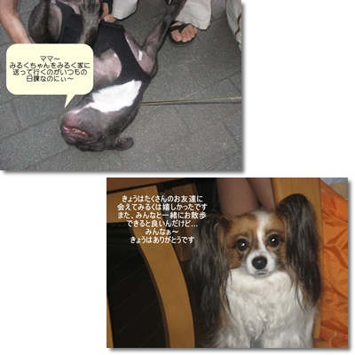 page4_20090822103327.jpg