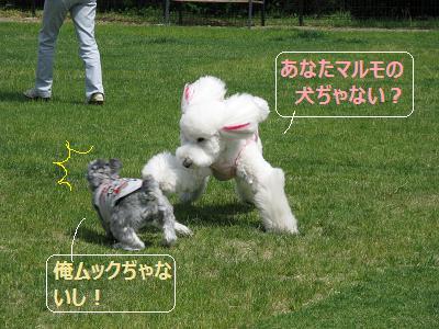 2011_0526_132401-IMG_6413.jpg