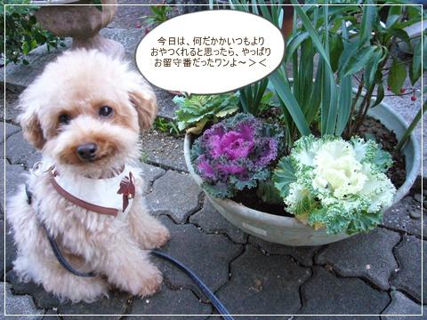 cats_20081120114630.jpg