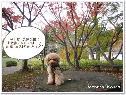 cats_20081201154820.jpg