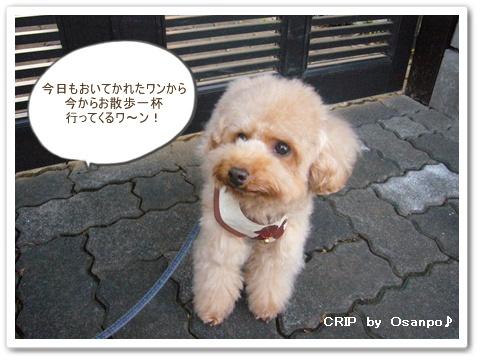cats_20081208130725.jpg