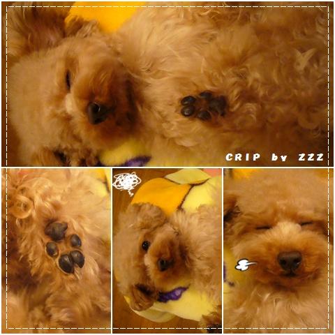 cats_20081211120559.jpg