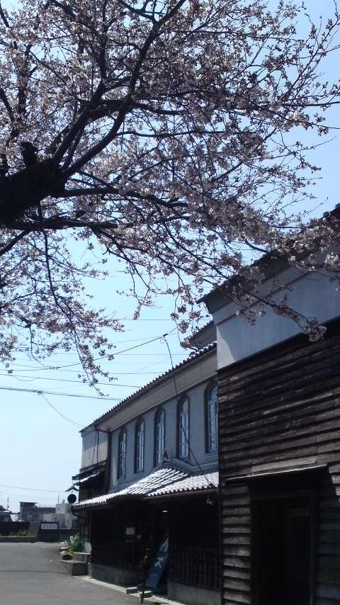 120404_桜