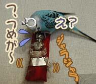 migawari-04.jpg