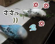 ささっ=3