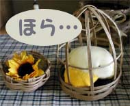 sola-daifuku05.jpg