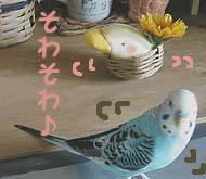 sola-daifuku09.jpg