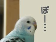 sola-furifuri03.jpg