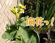 開花っ!!