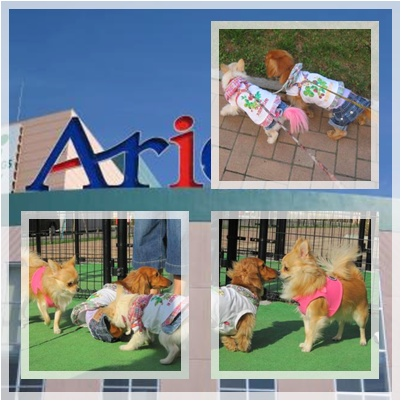 ~Ario~