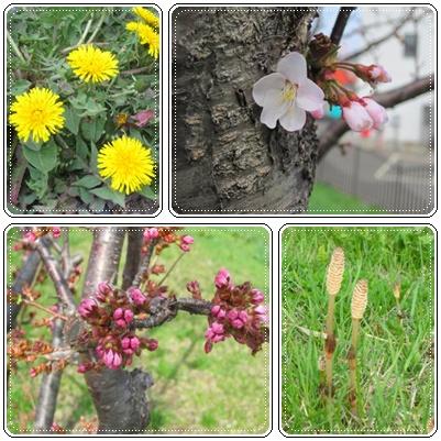 ~小さな春~