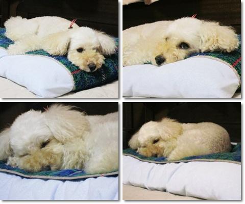 親父の枕で熟睡