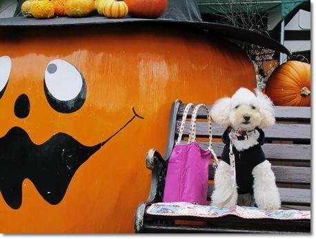 かぼちゃとミラ