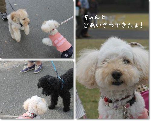 昭和記念公園のミラ_2