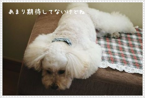 IMG_0228_2.jpg