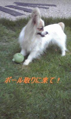 アリスボール遊び3