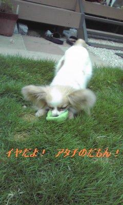 アリスボール遊び4
