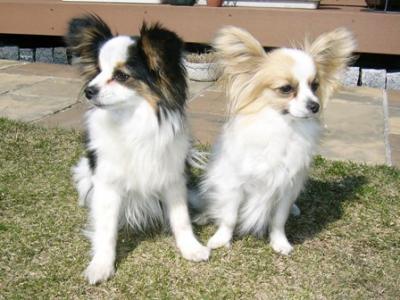 2009年3月マナとアリス